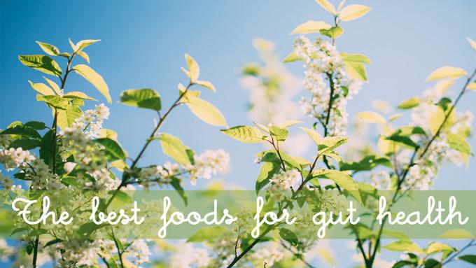 Gut Food Blog Post