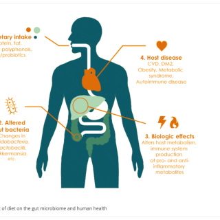 role of gut bacteria